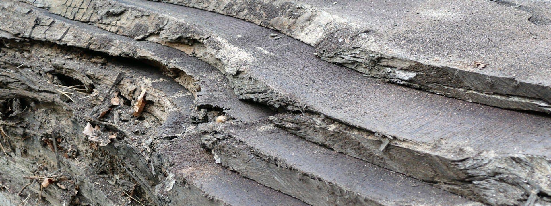 2,000-Year-Old Bog Oak
