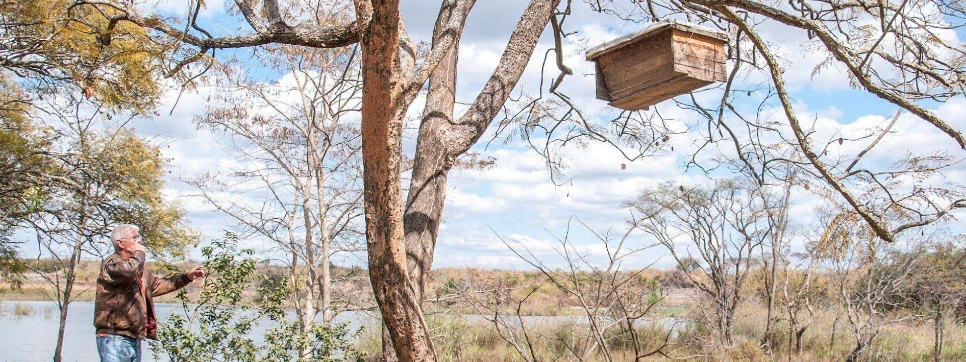 Створений місіонером та філантропом Джоном Енрайтом кооператив Bee Sweet Honey переїхав в Замбію