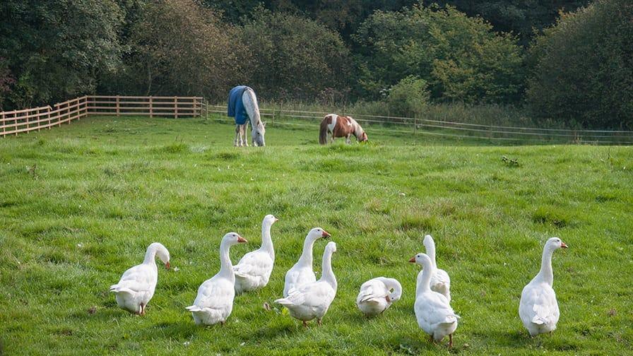 Grange Farm in North Yorkeshire